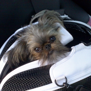 For your lil sleepy-head. Mabel LOVES the Sleepypod! It's a bed and a travel case in one!
